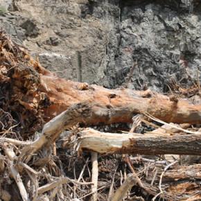 Огромни дървета и коренища, довлечени от порои, са затлачили язовира