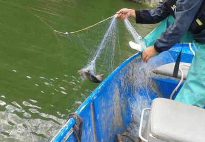 Иззеха 50 метра бракониерска мрежа