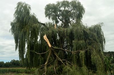 5 произшествия предизвика силния вятър
