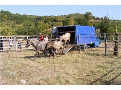 Заселват диви коне и в Момчилградско
